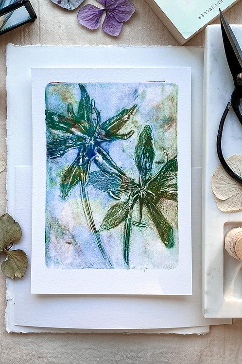 Gloriosa II 'mild green'