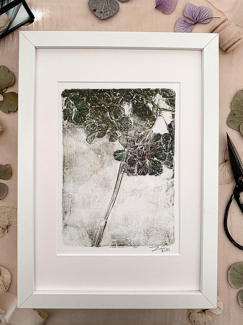 Hydrangea 'mild green' with frame