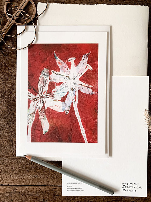 Gloriosa IIN 'scarlet'