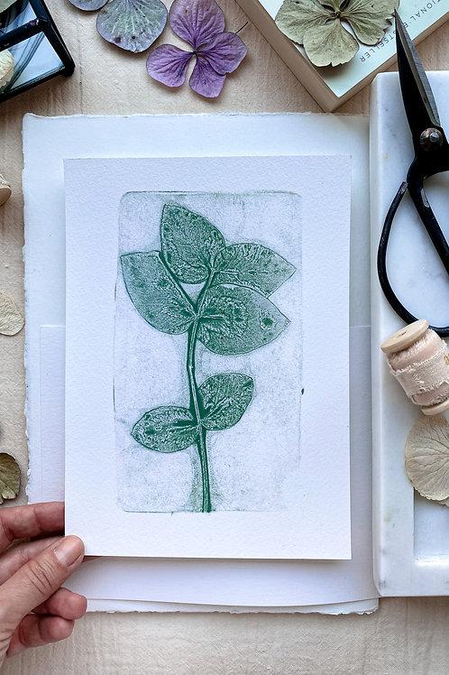Eucalyptus II 'grey green'