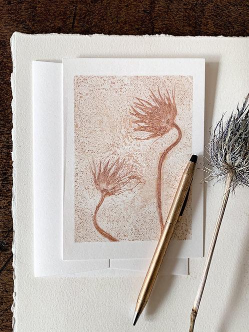 Pasque flower III 'mild terracotta'