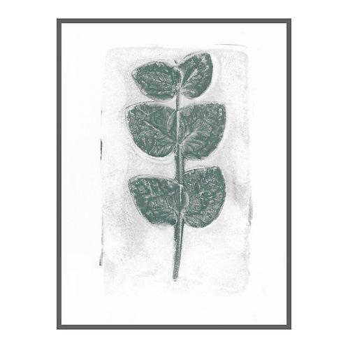 Eukalyptus III
