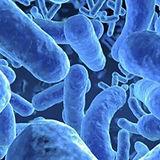 Microbiome-640x353.jpg