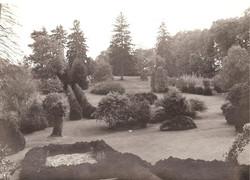 Vintage Evergreen Farm