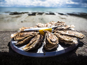 oysters on a beach shore