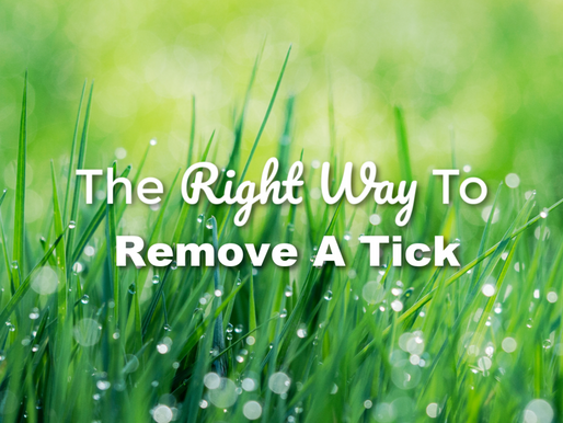 The Right Way To Remove A Tick
