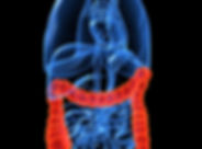 a 3d anatomical image of a colon