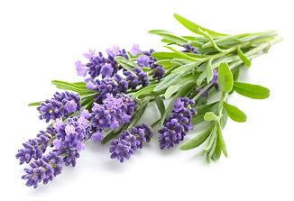 A fresh sprig of lavender representing functional medicine medicinals