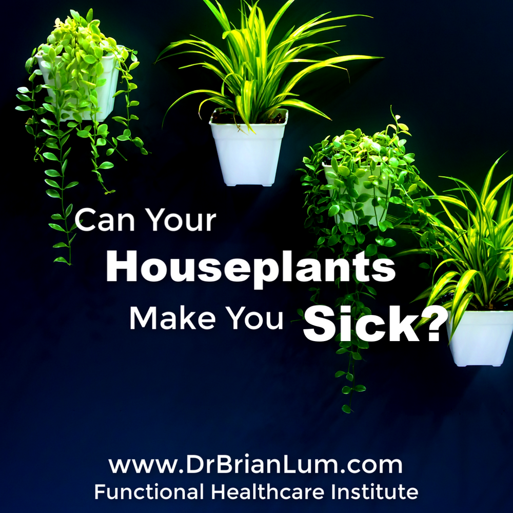 Hanging green houseplants against a black background. Text overlay that says Can Your Houseplants Make You Sick?