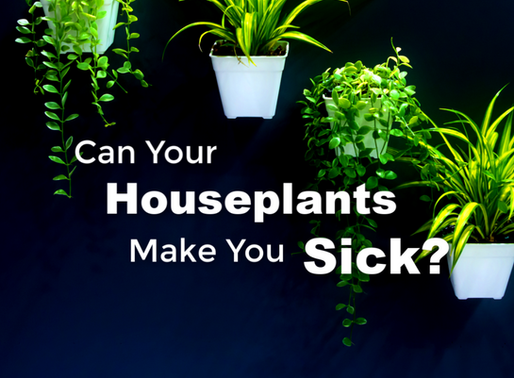 Can Your Houseplants Make You Sick?