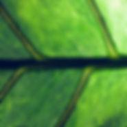 a closeup of the veins of a leaf