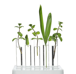 Test Tubes with Green Plants Representing Natural Medicine