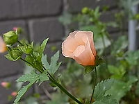 2012_0530_091719-RIMG0045.jpg