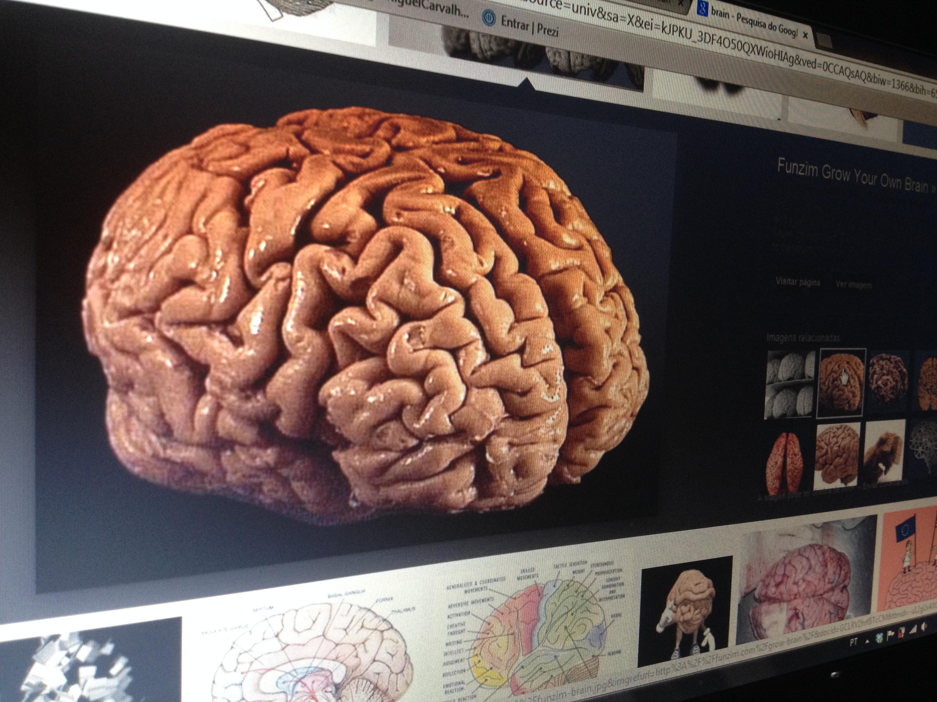 cérebro foto