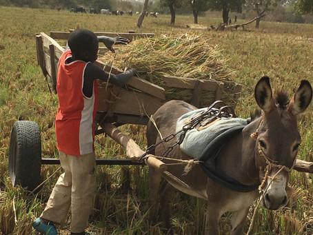 Mali - Sénégal : Nouvelles du terrain