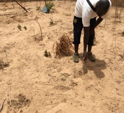 Au Sénégal, l'eau comme sourde à l'appel se fait désirée