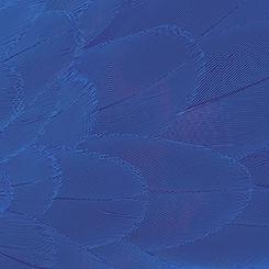 Halo Website Graphics_Tiles_012.jpg