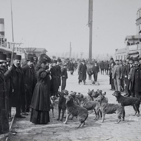 İstanbul'un yedi hikâyesi, yeni platformunda
