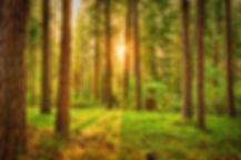 green-trees-675949.jpg