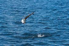 Kiene' Fly Fishing Travel