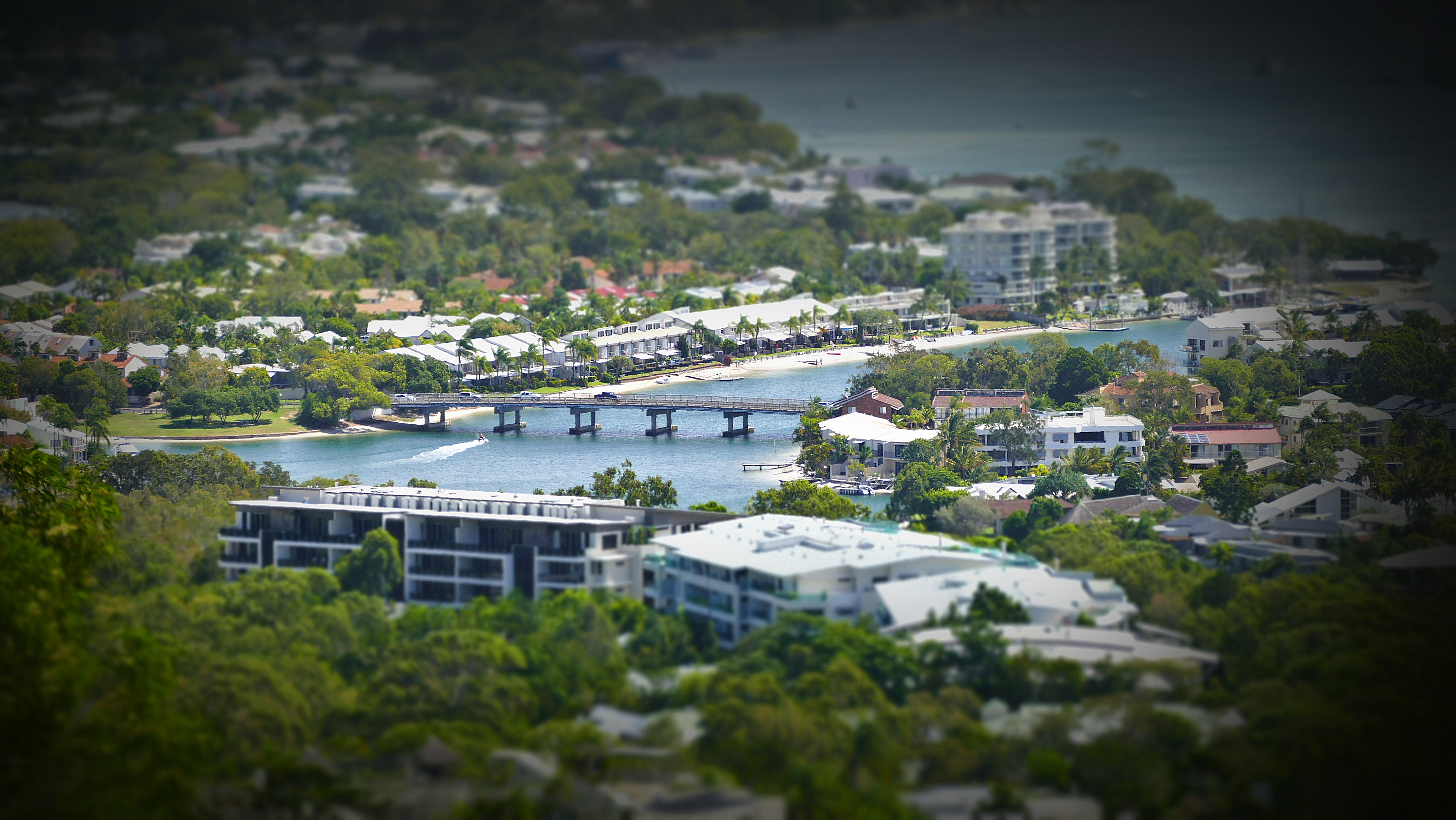 Miniature Stock Noosa
