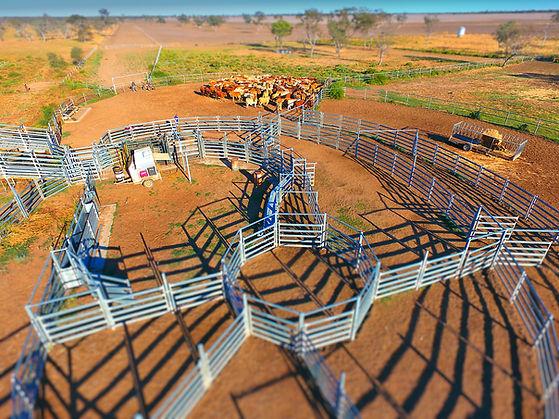 Moree Cattle Wide-004.JPG