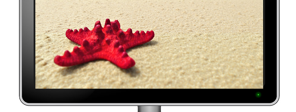 Red Starfish On Sandy Beach - Digital Photo Wallpaper Desktop Screensaver