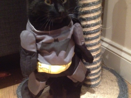 The Cat does dressing up