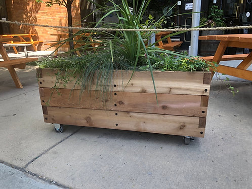 Cedar planter box, On Castors