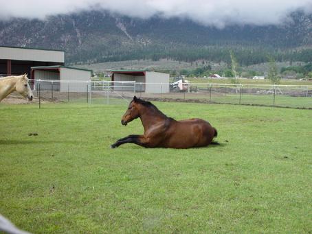 Lesson Horse