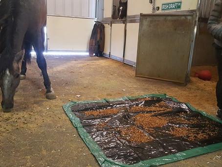 Irish Draft Horse :-)