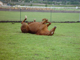 tn_1200_horse_pictures_5-25-08_001.jpg.png