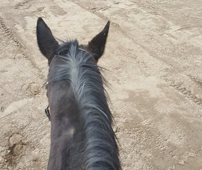 Exercise Riding