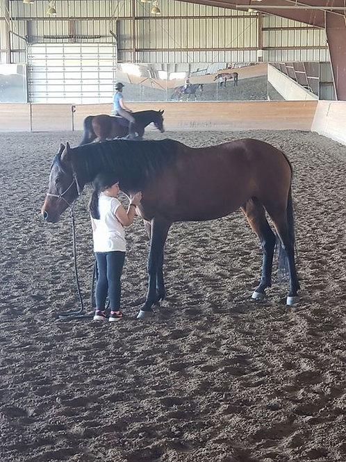Horsemanship program August 13-17