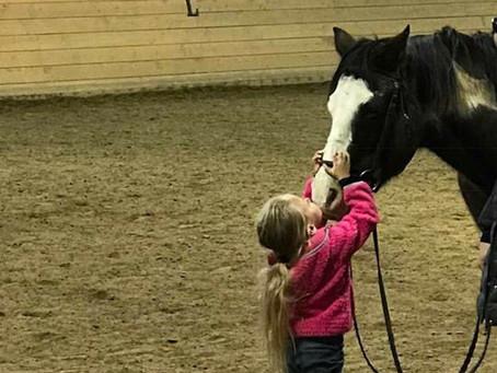 Lesson Horses
