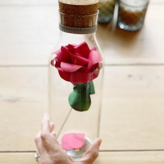 red rose 1.jpg