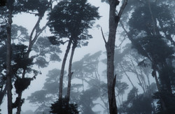 INTO THE CLOUD FOREST