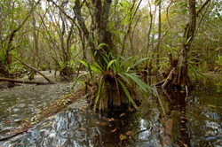 INTO THE SWAMPS