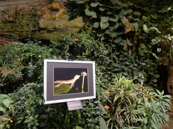Exhibition in the palm house