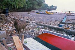 SAMBA DEER SURROUNDED BY WASTE