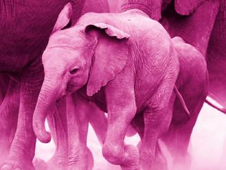 אל תחשבו על פיל ורוד