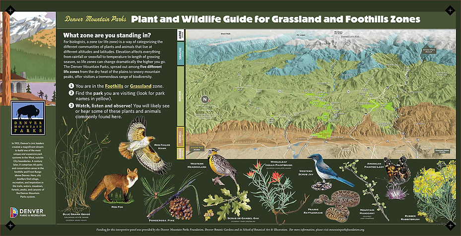 Sign #22 Flora and Fauna-GRASSLAND FOOTH