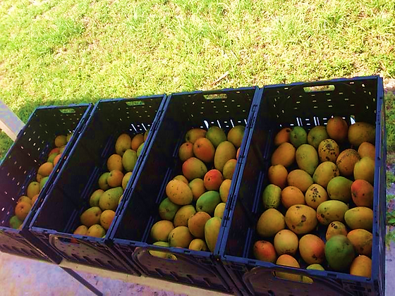 Fruits For  Local Pick up Only