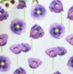 Wallpaper Purple Poppies Snow.jpg