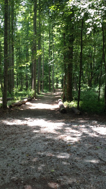 Wooded Pathway