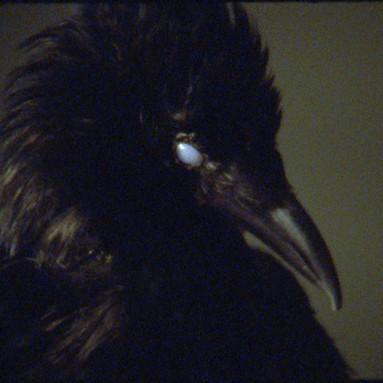 the bird game by marianna simnett.