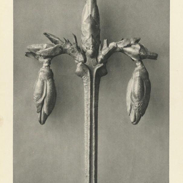 botanical mind.
