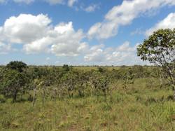 Cerrado of Amapá