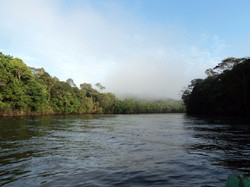 National Forest of Amapá
