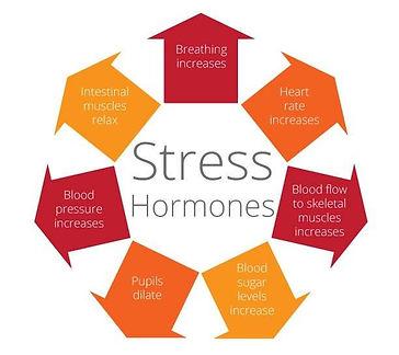Stress-Hormones.jpg